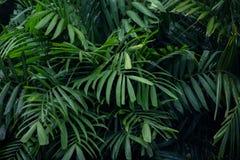 Descenso del agua en hoja de palma verde Foto de archivo