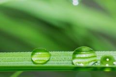 Descenso del agua en la hoja de la hierba en la macro, fondo de la naturaleza fotografía de archivo