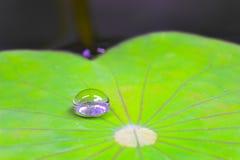 Descenso del agua en la hoja del loto Foto de archivo
