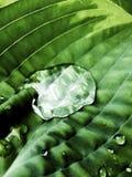 Descenso del agua en la hoja ondulada Imagen de archivo