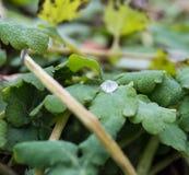 Descenso del agua en las hojas verdes Foto de archivo