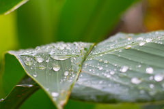 Descenso del agua en leef verde Imágenes de archivo libres de regalías