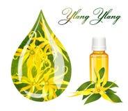 Descenso del ylang del ylang stock de ilustración