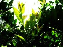 Descenso en árbol Imagenes de archivo