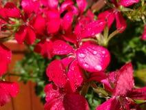 Descenso en la flor Fotografía de archivo