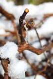 Descenso helado del agua en la ramita Imagen de archivo libre de regalías