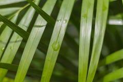 Descenso mojado verde de la palmera Imagen de archivo