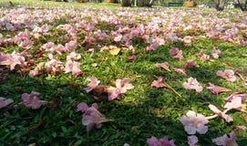 descenso rosado de las flores en verde Foto de archivo