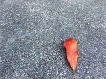 Descenso secado rojo de la hoja en piso granoso y de piedra Fondo superficial cl?sico de la textura fotos de archivo libres de regalías