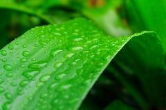 Descenso verde de la hoja del agua después de la lluvia Fotos de archivo