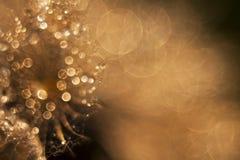 Descensos brillantes del agua Imágenes de archivo libres de regalías