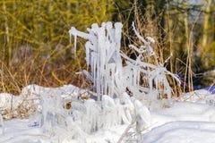 Descensos congelados del agua en la hierba y de los arbustos con un sol brillante del invierno Fotografía de archivo
