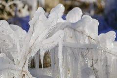 Descensos congelados del agua en la hierba y de los arbustos con un sol brillante del invierno Imagen de archivo