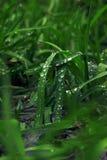 Descensos de la hierba verde y del agua que ruedan abajo al agua Fotos de archivo libres de regalías