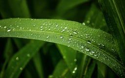 Descensos de la naturaleza y del agua en las hojas imágenes de archivo libres de regalías