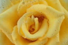 Descensos de la rosa y del agua del amarillo Imágenes de archivo libres de regalías