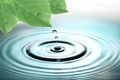 Descensos de las hojas del verde y del agua azul. Foto de archivo libre de regalías