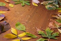 Descensos de las hojas y de la lluvia de otoño Fotos de archivo libres de regalías