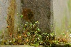 Descensos de rocío Fotos de archivo