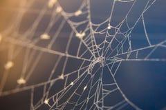 Descensos de rocío en el web de araña en la salida del sol fotografía de archivo