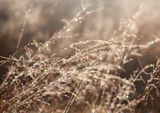 Descensos de rocío en la hierba del campo Foto de archivo libre de regalías
