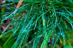 Descensos de rocío en las hojas de la hierba Fotografía de archivo libre de regalías