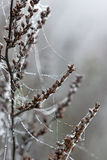 Descensos de rocío en telaraña de la araña Foto de archivo
