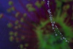 Descensos de rocío en un web de araña Fotos de archivo