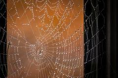 Descensos de rocío en un Web de araña Foto de archivo