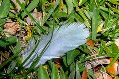Descensos de rocío en una pluma blanca foto de archivo