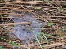 Descensos de rocío encaramados en un web de araña Imagenes de archivo