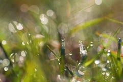 Descensos de rocío frescos de la mañana en la hierba imagen Imágenes de archivo libres de regalías