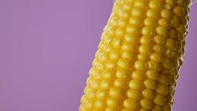 Descensos del agua corridos abajo o cayendo en granos del maíz fresco almacen de video