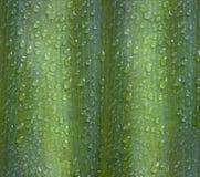 Descensos del agua de la hoja después de la lluvia Foto de archivo libre de regalías