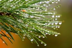 Descensos del agua del pino Foto de archivo