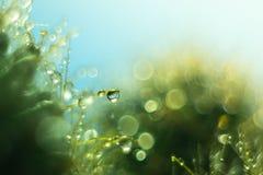 Descensos del agua en agujas de un cactus Imagen de archivo libre de regalías