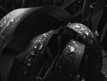 Descensos del agua en hierba fotos de archivo libres de regalías