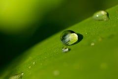 Descensos del agua en hierba Imagen de archivo libre de regalías