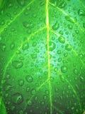 Descensos del agua en hoja Imagen de archivo libre de regalías
