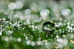 Descensos del agua en hoja de palma Imagen de archivo libre de regalías