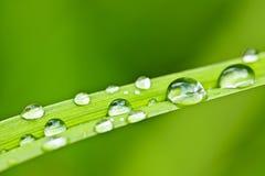 Descensos del agua en la cuchilla de la hierba imagen de archivo