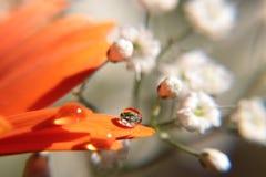 Descensos del agua en la flor del Gerbera Imágenes de archivo libres de regalías