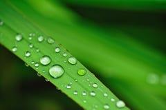 Descensos del agua en la hierba Fotografía de archivo libre de regalías