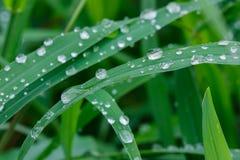 Descensos del agua en la hierba verde. Foto de archivo libre de regalías