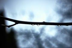 Descensos del agua en la rama del árbol en día lluvioso fotografía de archivo