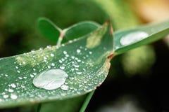 Descensos del agua en las hojas Fotografía de archivo libre de regalías
