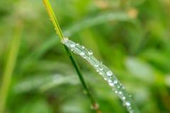 Descensos del agua en las hojas de la hierba imágenes de archivo libres de regalías