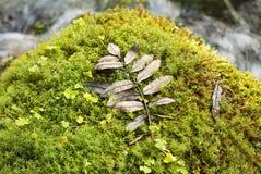 Descensos del agua en las hojas viejas Imagen de archivo