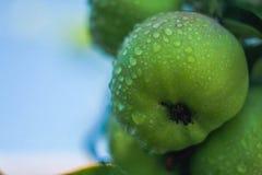 Descensos del agua en pequeña manzana verde fotografía de archivo libre de regalías