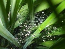 Descensos del agua en spiderweb en las hojas Fotografía de archivo libre de regalías